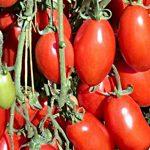 tomato san marzona