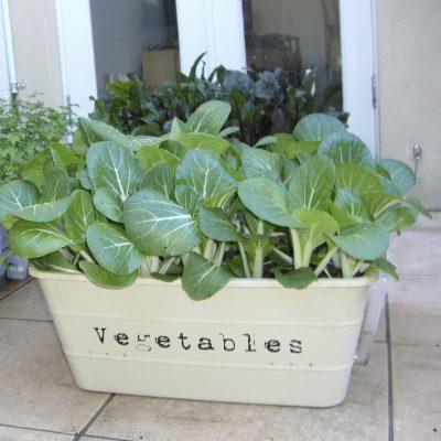 asian greens pot