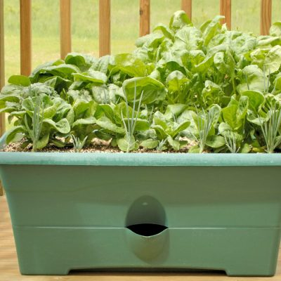 spinach pot