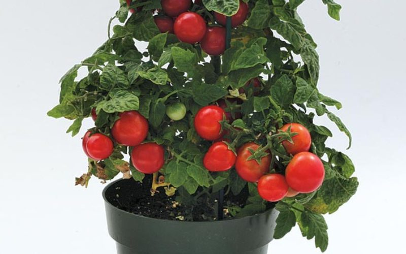 Best Vegetables to Grow in a Pot